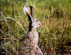 Film.Jackrabbit