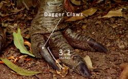 Mst bird claw
