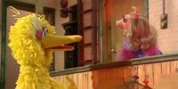 Did Miss Piggy appear on Sesame Street?