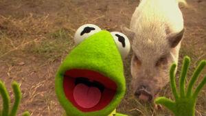 KSY-Kermit&Pig