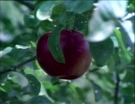 File:LookaLittleCloser.Appletree.jpg