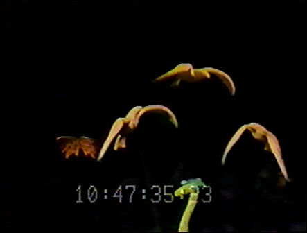 File:Unima1980 15.jpg
