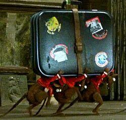Ratbellhops