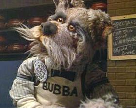 Bubba-dogcity