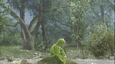 Sesame Street On My Pond