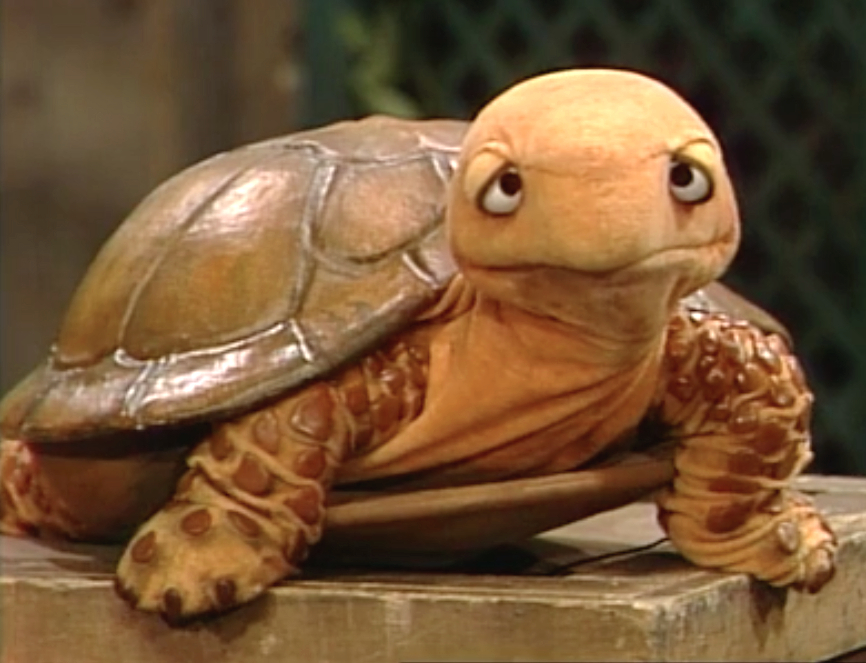 File:Shelleyturtle.jpg
