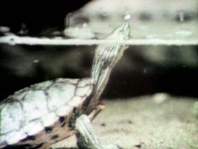 File:2529-Turtle.jpg