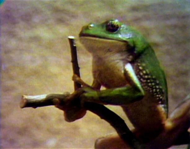 File:Song.frogstruggle.jpg