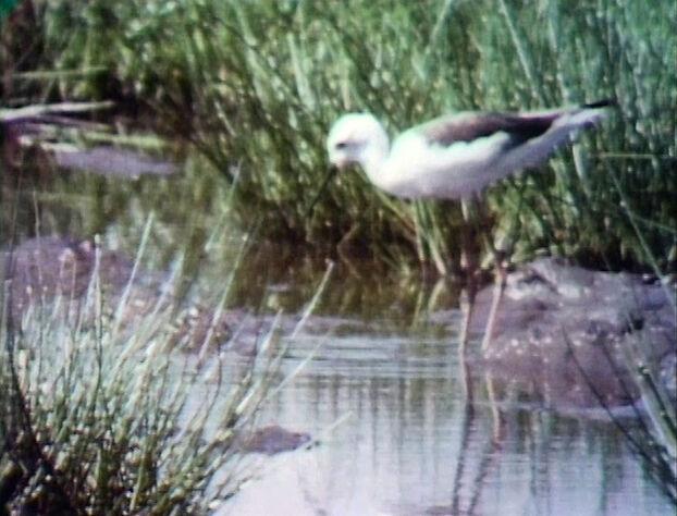 File:Film.Birdseat.jpg