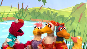 Elmo's Ducks