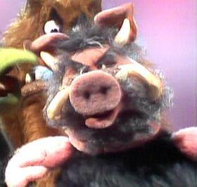 Warthog-muppetshow