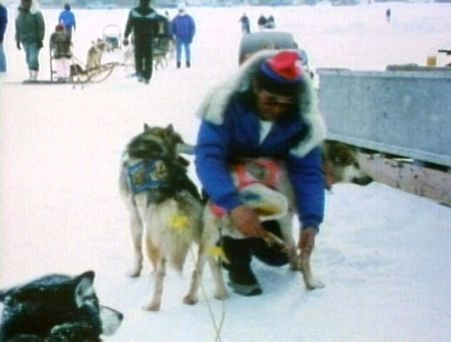 File:AlaskaDogs.jpg