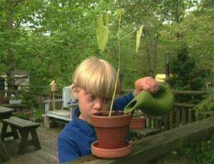 File:Ewflowers-film.jpg