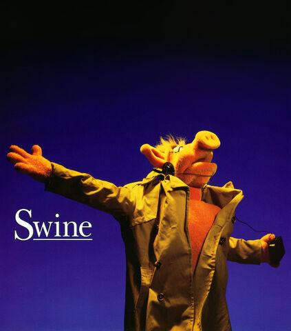 File:Swine-shine.jpg