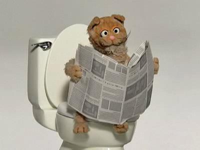 File:Cat-toilet.jpg