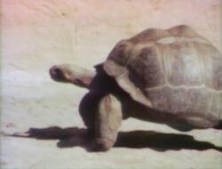 Turtlefilm
