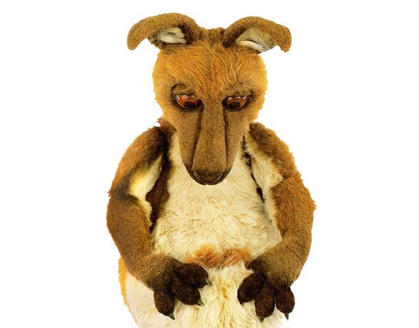 File:Kasey the Kangaroo.jpg
