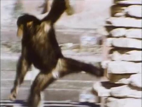File:Monkeysfilmpianomusic.jpg