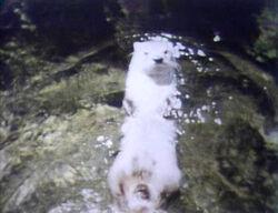 1449-Otter