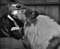 Lassie-kissrowlf