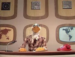 215 news flash duck