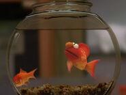 Elmopetfish