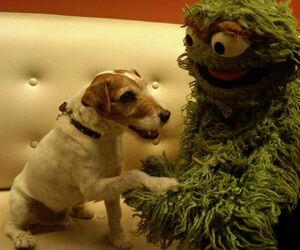 Uggie and Oscar