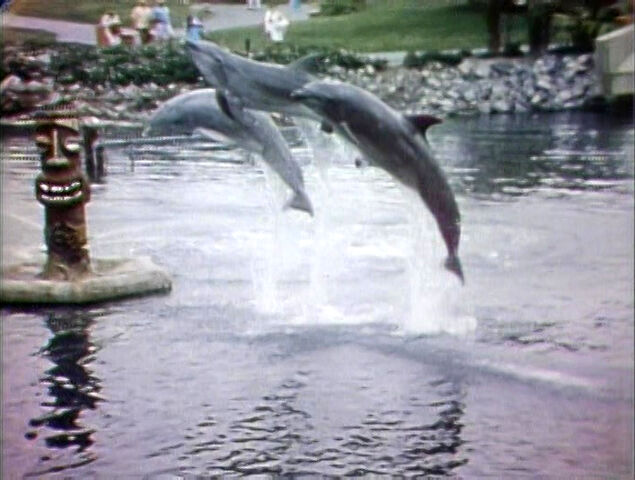 File:3-Dolphins.jpg