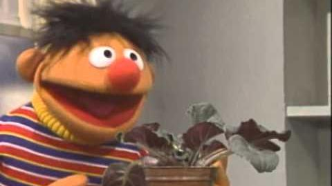 Sesame Street Little Plant Song With Ernie