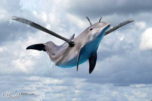 File:Dolphinwasp.jpg