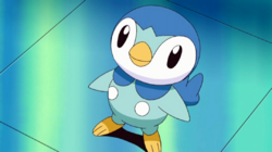 File:250px-Dawn Piplup.png