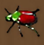 Giant stag beetle e