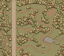 The Southern Forest