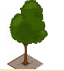 File:Small Tree 2.png
