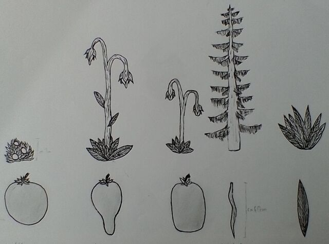File:Rishdelian Main Plants.jpg