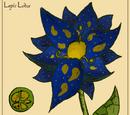 Lapis Lotus
