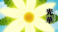 Form Four, Sunflower