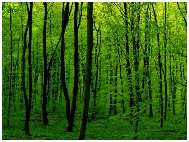 File:Green Is Green by JeanFrancois.jpg