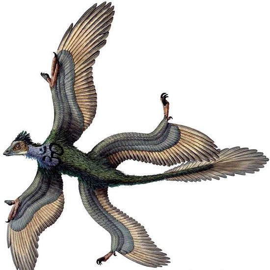 image dragonbird sagepng naruto fanon wiki fandom