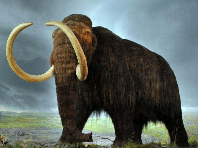 File:Woolly mammoth.jpg