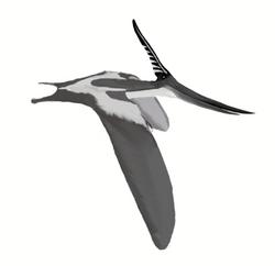 495px-Pteranodon longiceps mmartyniuk wiki