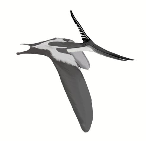 File:495px-Pteranodon longiceps mmartyniuk wiki.png