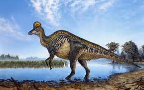 File:Corythosaurus.jpg