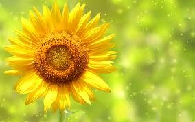 File:Sage sun.jpg