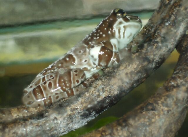 File:Tree frog.jpg