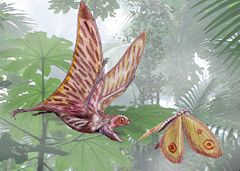 240px-AnurognathusDB