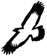 File:Elmira Soaring Eagles.jpg