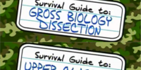 Guide to: Gross Biology Dissection and Upperclassmen