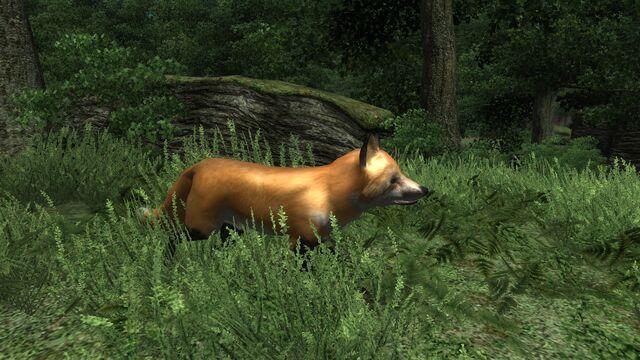 File:Rabid Fox 02.jpg
