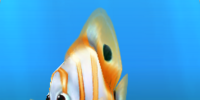 Ambient Fish